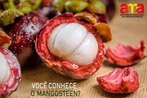 Mangostão MProdutor (1)