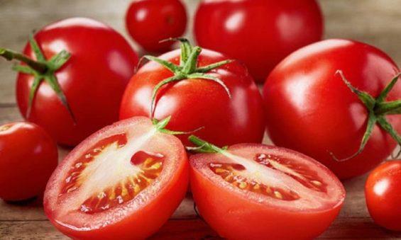 Tomate MProdutor